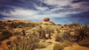 arid conditions