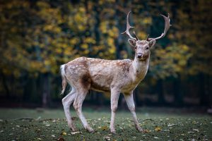 Does draw weight really matter when hunting deer?