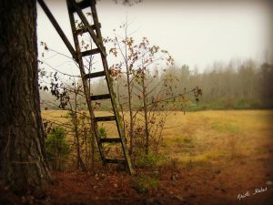 Different ways to get up to the treestand