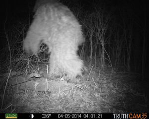 Trail camera night images