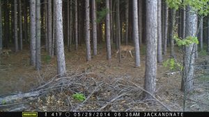 Image quality of trail cams