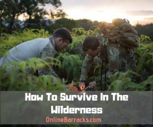 How to survive wilderness