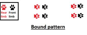 bound pattern