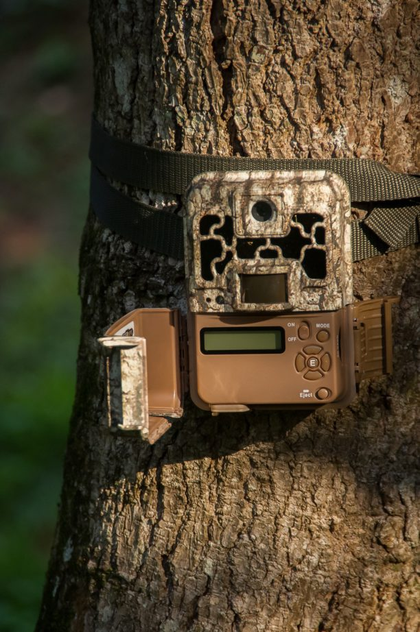 trail cameras for hunting