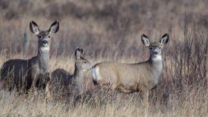 deer smelling