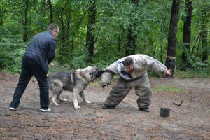 dog attacking man