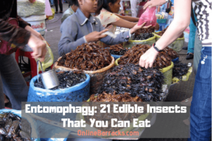 Entomophagy Edible Insects