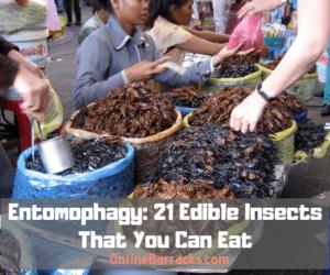 Entomophagy Edible Insects