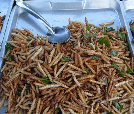 Bamboo Worm