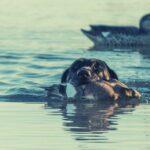 Best-hunting-dog-breeds