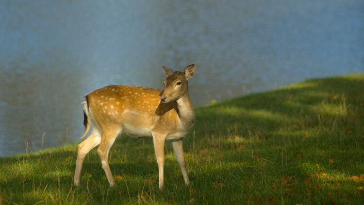 Buying Guide For Hunting Deer with Crossbows