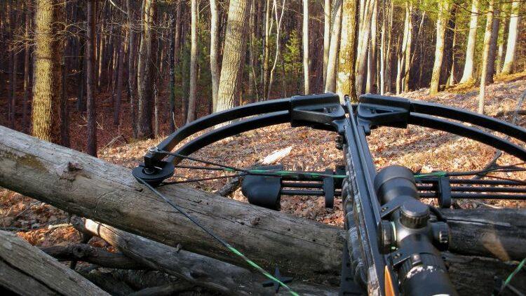 best crossbows under 500