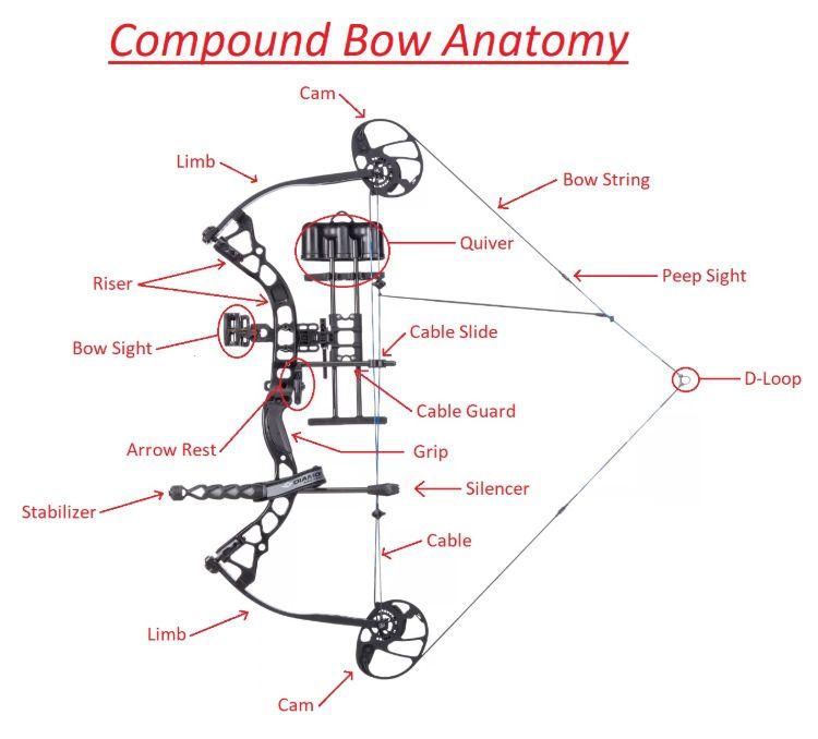 compound bow anatomy