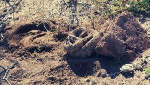 best-snake-gaiters